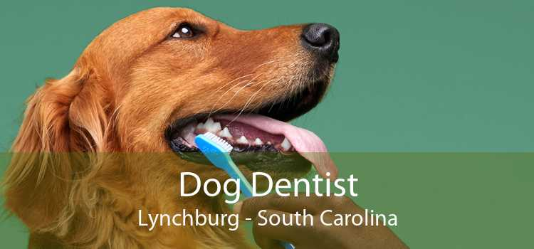 Dog Dentist Lynchburg - South Carolina