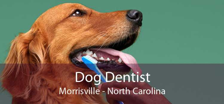 Dog Dentist Morrisville - North Carolina