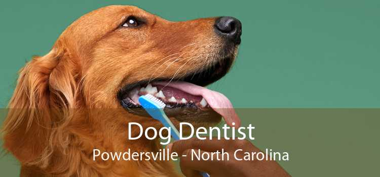 Dog Dentist Powdersville - North Carolina