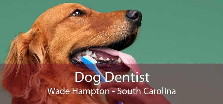 Dog Dentist Wade Hampton - South Carolina