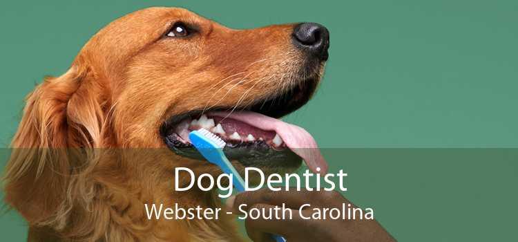 Dog Dentist Webster - South Carolina