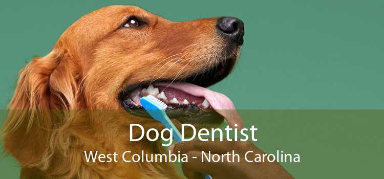 Dog Dentist West Columbia - North Carolina