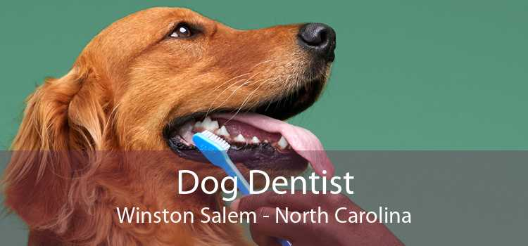 Dog Dentist Winston Salem - North Carolina