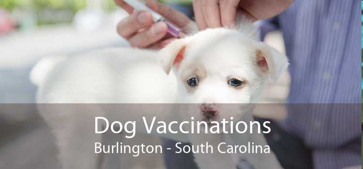Dog Vaccinations Burlington - South Carolina