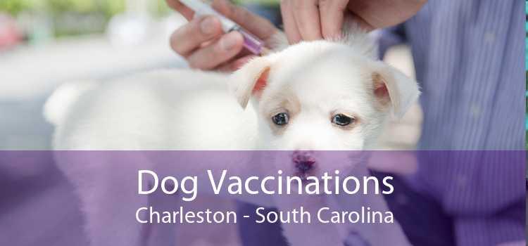 Dog Vaccinations Charleston - South Carolina