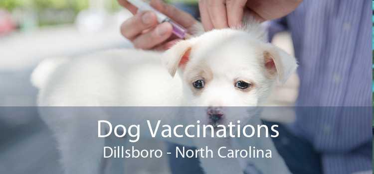 Dog Vaccinations Dillsboro - North Carolina