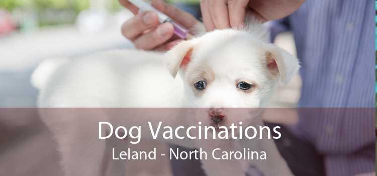 Dog Vaccinations Leland - North Carolina