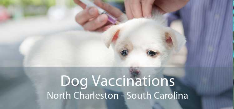Dog Vaccinations North Charleston - South Carolina