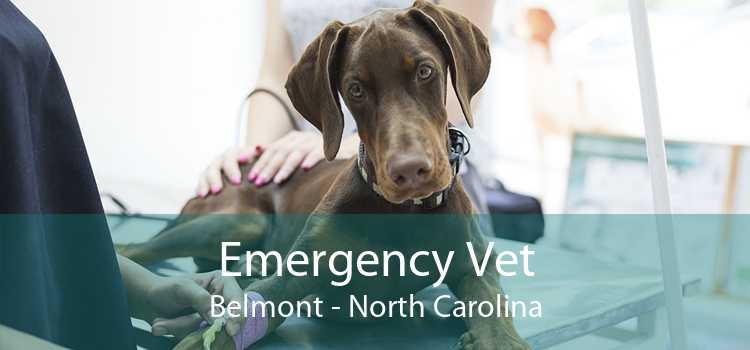 Emergency Vet Belmont - North Carolina