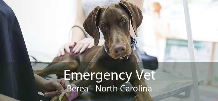 Emergency Vet Berea - North Carolina