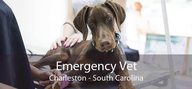 Emergency Vet Charleston - South Carolina
