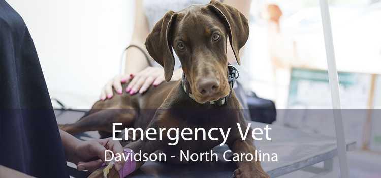 Emergency Vet Davidson - North Carolina