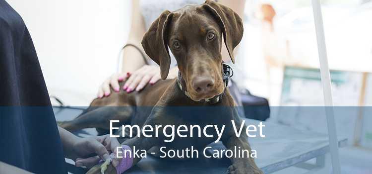 Emergency Vet Enka - South Carolina