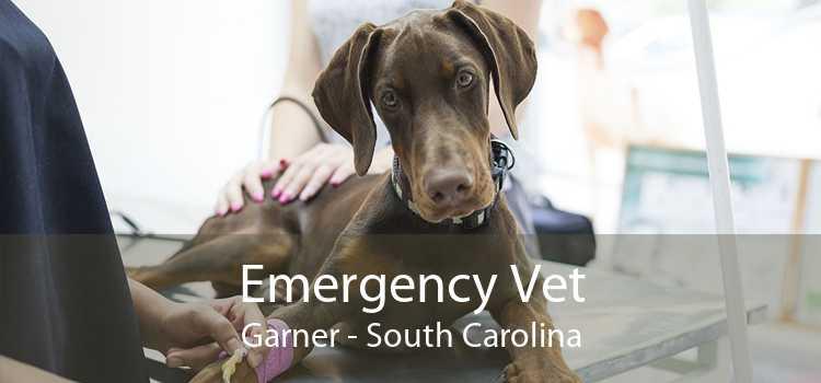 Emergency Vet Garner - South Carolina