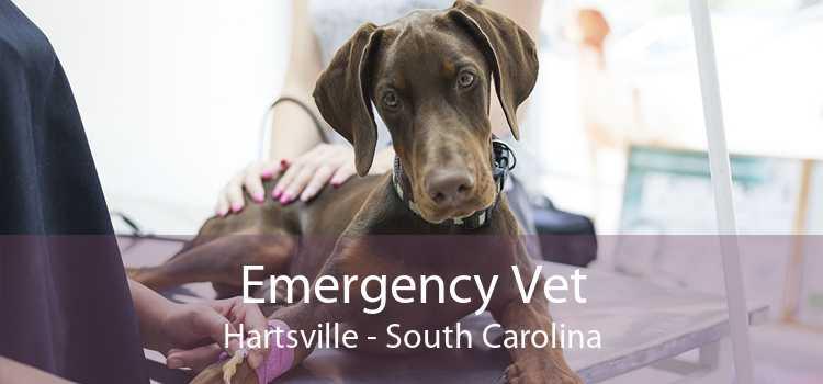 Emergency Vet Hartsville - South Carolina