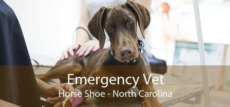 Emergency Vet Horse Shoe - North Carolina