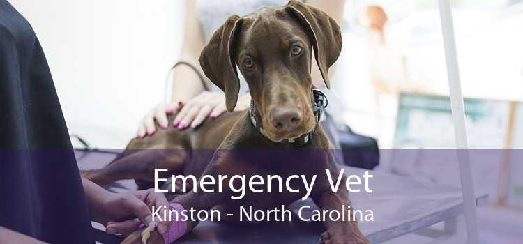 Emergency Vet Kinston - North Carolina