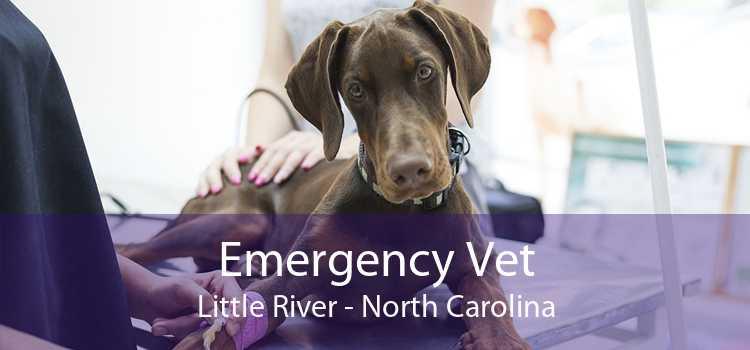 Emergency Vet Little River - North Carolina