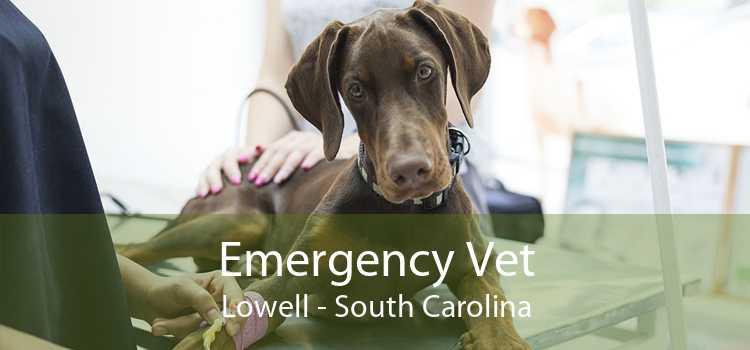 Emergency Vet Lowell - South Carolina