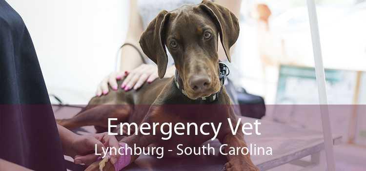 Emergency Vet Lynchburg - South Carolina