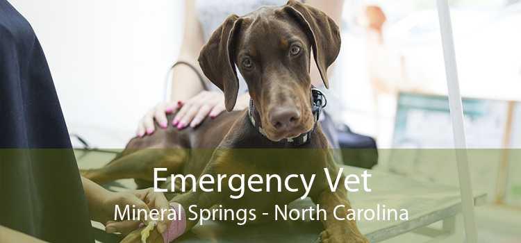 Emergency Vet Mineral Springs - North Carolina