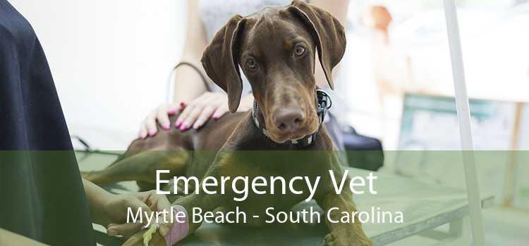 Emergency Vet Myrtle Beach - South Carolina