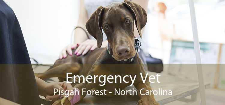 Emergency Vet Pisgah Forest - North Carolina