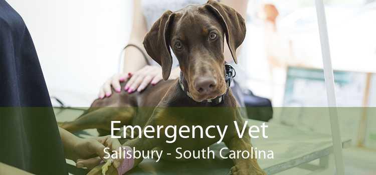 Emergency Vet Salisbury - South Carolina