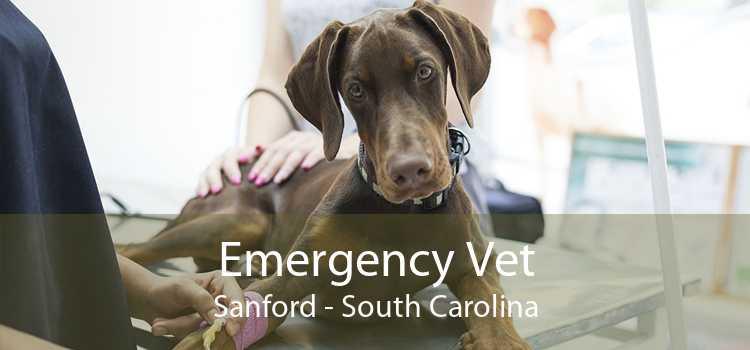 Emergency Vet Sanford - South Carolina