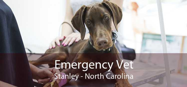 Emergency Vet Stanley - North Carolina
