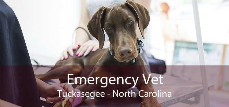 Emergency Vet Tuckasegee - North Carolina