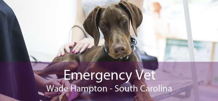 Emergency Vet Wade Hampton - South Carolina