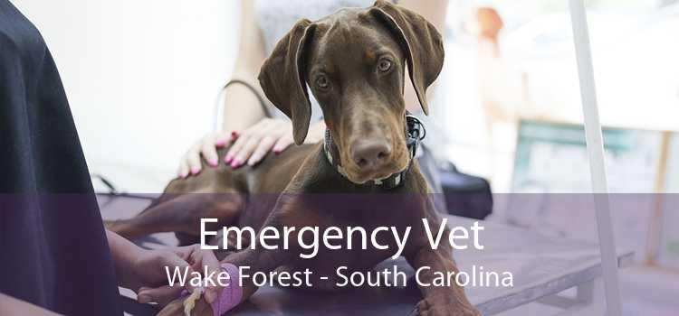 Emergency Vet Wake Forest - South Carolina
