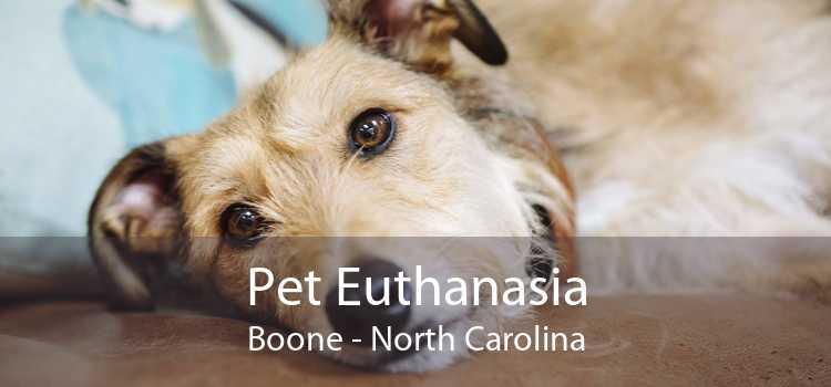 Pet Euthanasia Boone - North Carolina
