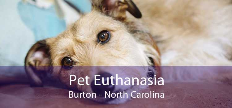 Pet Euthanasia Burton - North Carolina