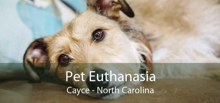 Pet Euthanasia Cayce - North Carolina