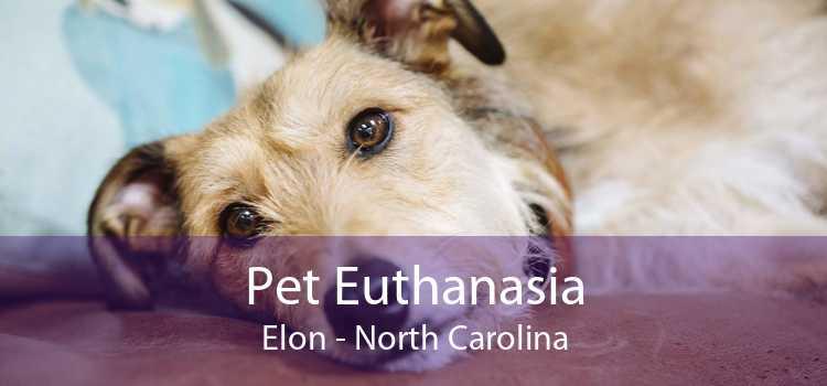 Pet Euthanasia Elon - North Carolina