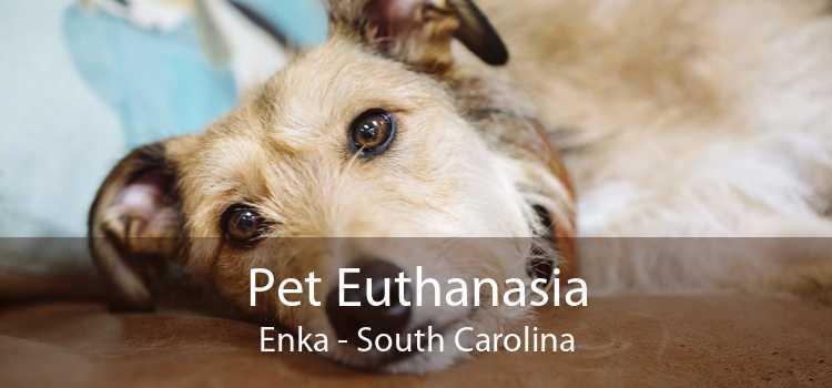 Pet Euthanasia Enka - South Carolina