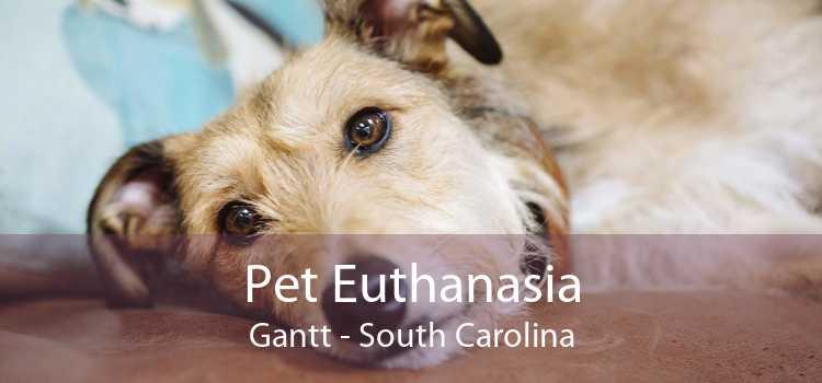 Pet Euthanasia Gantt - South Carolina