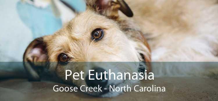 Pet Euthanasia Goose Creek - North Carolina