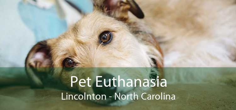 Pet Euthanasia Lincolnton - North Carolina