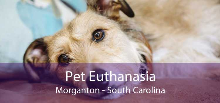 Pet Euthanasia Morganton - South Carolina