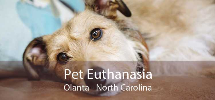 Pet Euthanasia Olanta - North Carolina