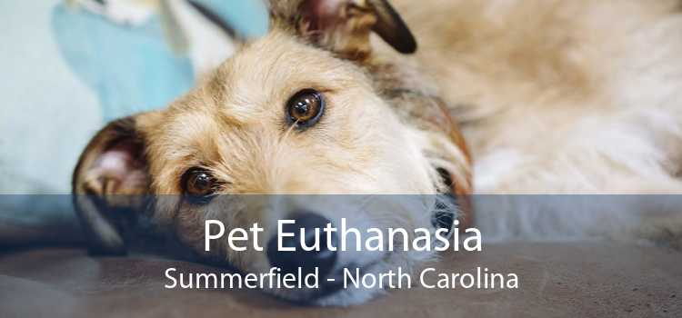 Pet Euthanasia Summerfield - North Carolina