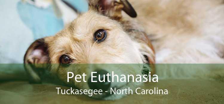 Pet Euthanasia Tuckasegee - North Carolina