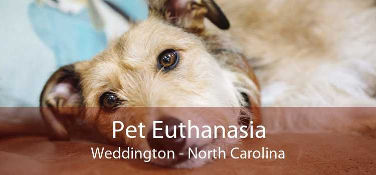 Pet Euthanasia Weddington - North Carolina