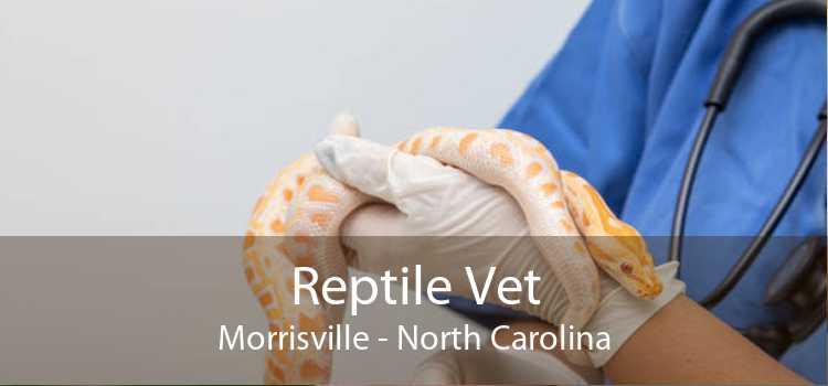 Reptile Vet Morrisville - North Carolina