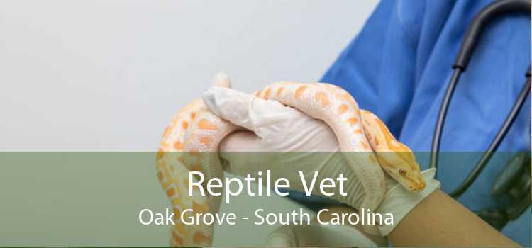 Reptile Vet Oak Grove - South Carolina