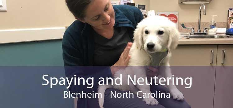 Spaying and Neutering Blenheim - North Carolina
