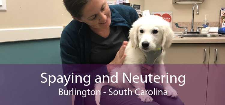 Spaying and Neutering Burlington - South Carolina